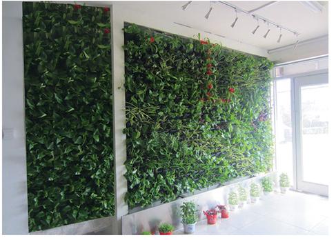 室内室外墙体绿化